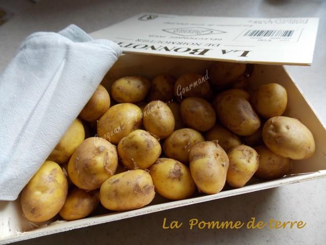 Pomme-de-terre-DSCN3646_33645-640x480